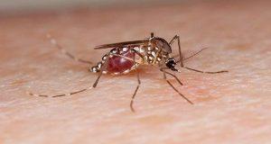 dengue-mosqute-600x337