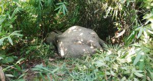 lama-elephant-20191130195149