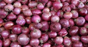onion_