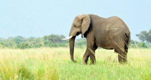 elephant-20200107144908